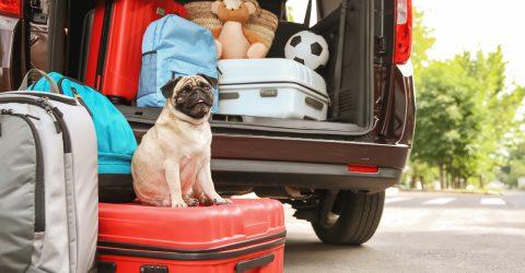 Coffre de voiture rempli de valises.